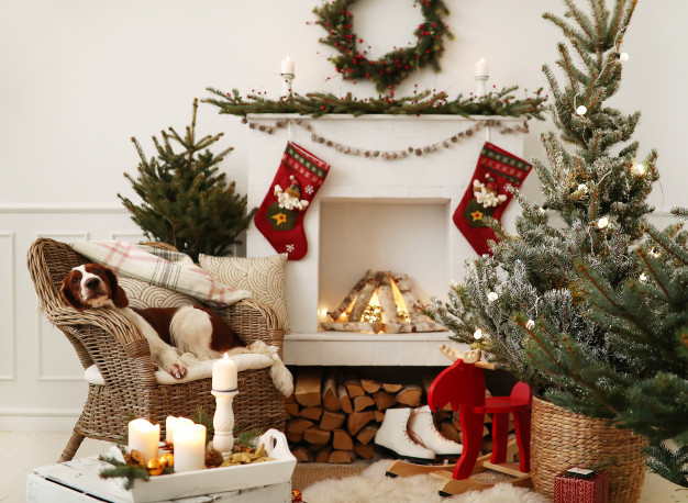 cute-little-dog-christmas-decorated-living-room_144627-23423