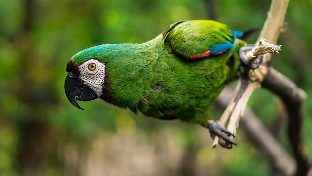 papoušek.jpg